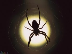 عنکبوتها