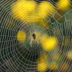 عنکبوت فول اچ دی