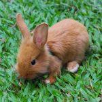 عکسهای خرگوش