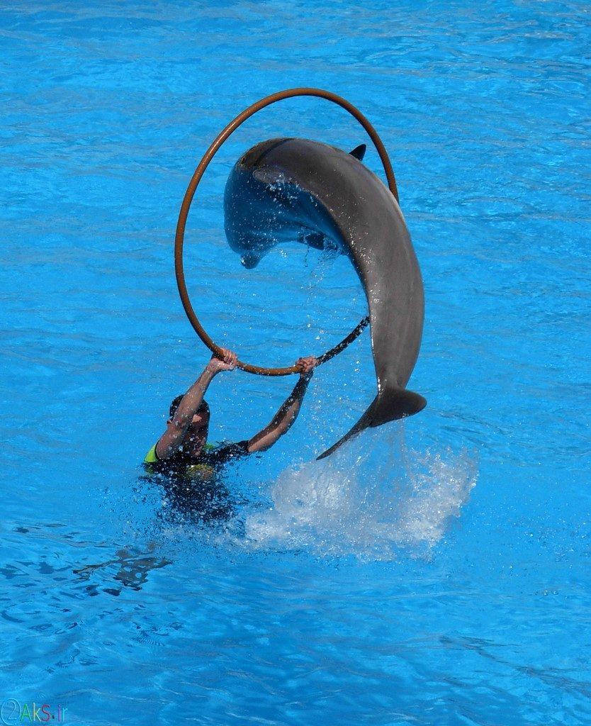 عکسهای دلفین