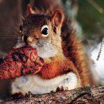 عکسهای سنجاب