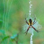 عکسهای عنکبوت