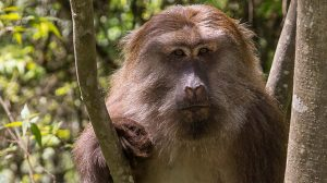 عکسهای میمون
