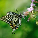 عکسهای پروانه