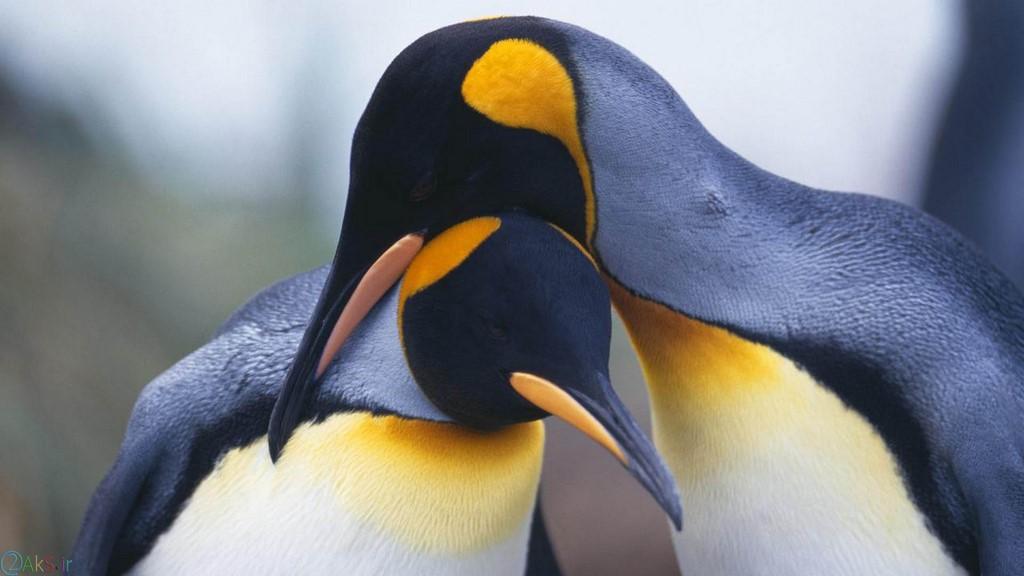 عکسهای پنگوئن