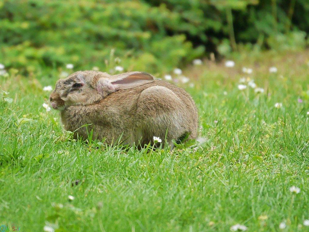 عکس بچه خرگوش