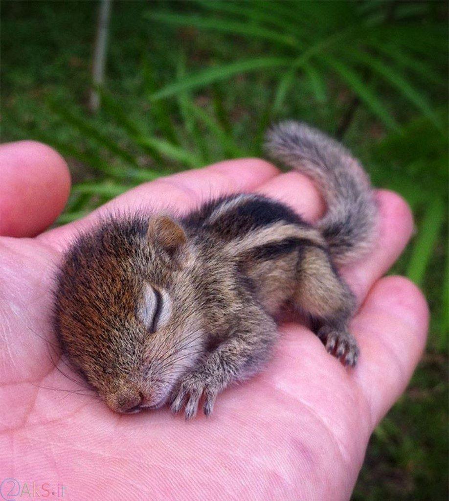 عکس بچه سنجاب