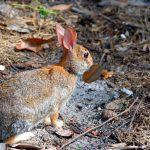 عکس خرگوش با کیفیت بالا