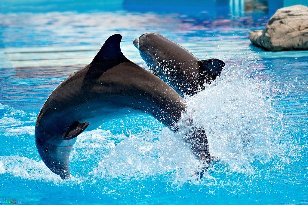 عکس دلفین