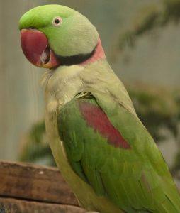 عکس طوطی سبز