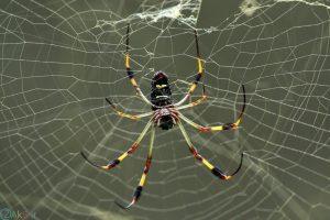 عکس عنکبوت فول اچ دی