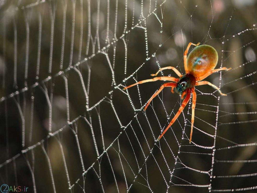 عکس عنکبوت
