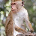عکس میمون