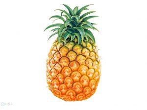 عکس های آناناس