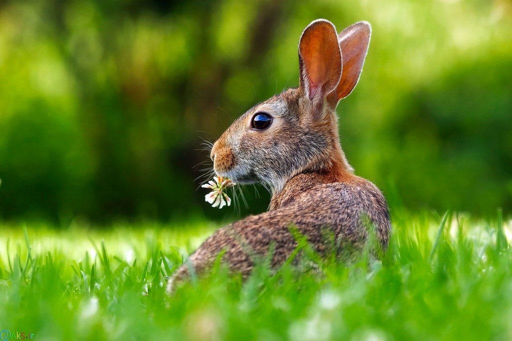 عکس های خرگوش
