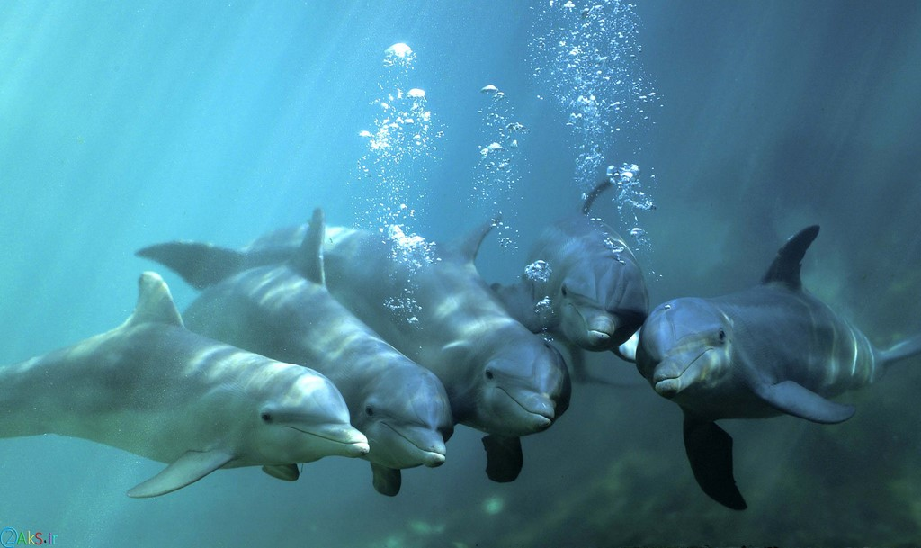 عکس های دلفین