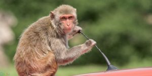 عکس های میمون