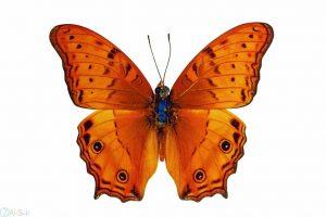 عکس های پروانه