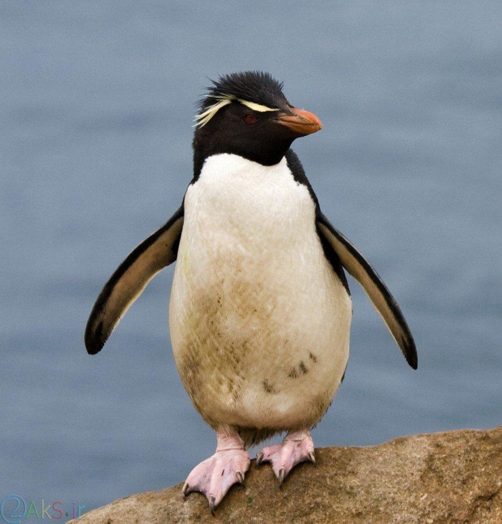 عکس های پنگوئن