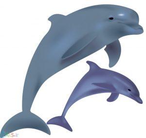 عکس کارتونی دلفین