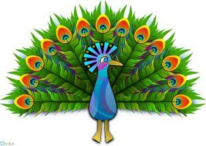 عکس کارتونی طاووس