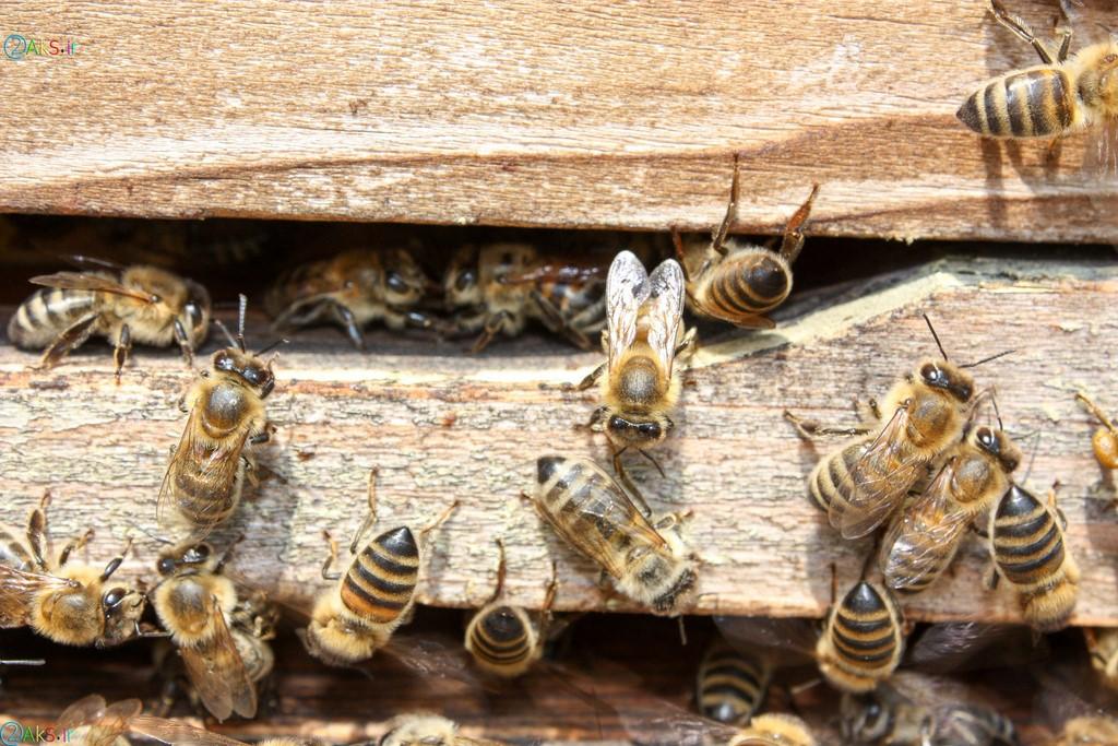 عکس کندو زنبور
