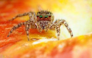عکس کیفیت بالا عنکبوت