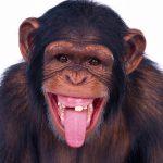 میمون ها