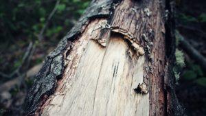 والپیپر تنه درخت