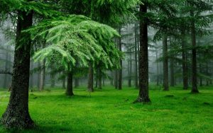 والپیپر جنگل سبز
