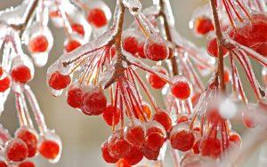 والپیپر درخت یخ زده