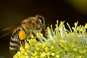والپیپر زنبور عسل