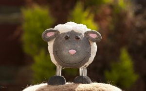 والپیپر عروسک گوسفند