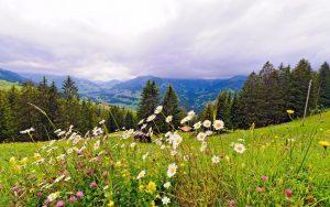 والپیپر گل در طبیعت