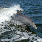 گالری تصاویر دلفین