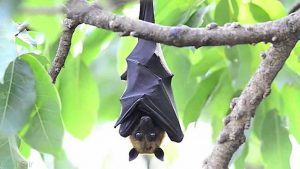 گالری خفاش
