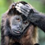 گالری عکس میمون