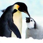 گالری پنگوئن