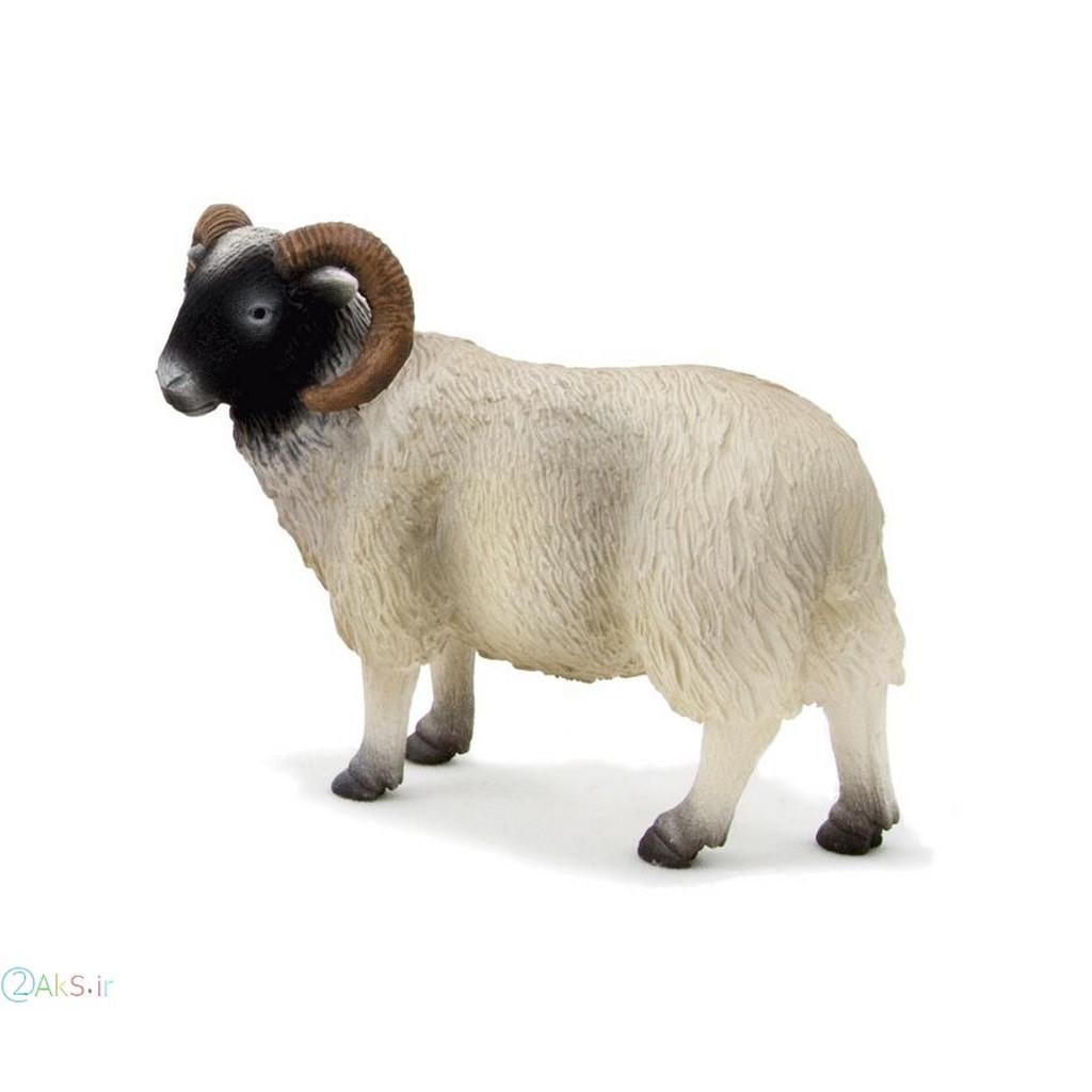 گوسفندانیمیشنی