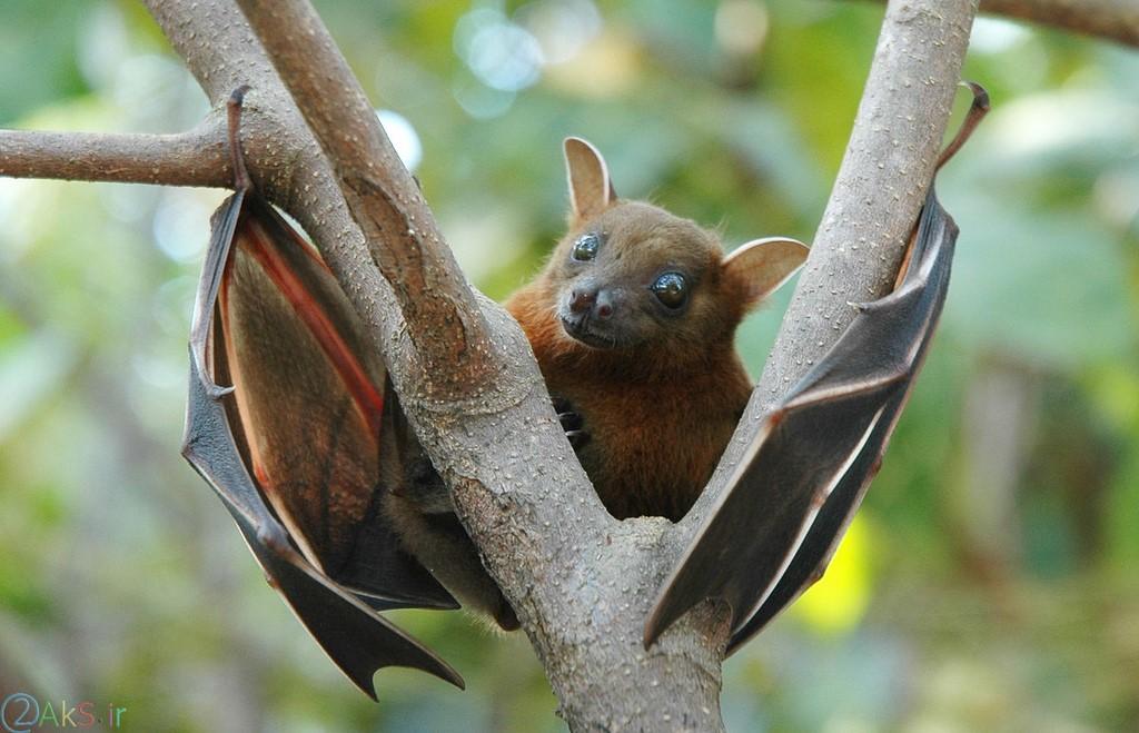 Photo Bat