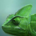 Photo Chameleon