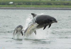 Photo Dolphin