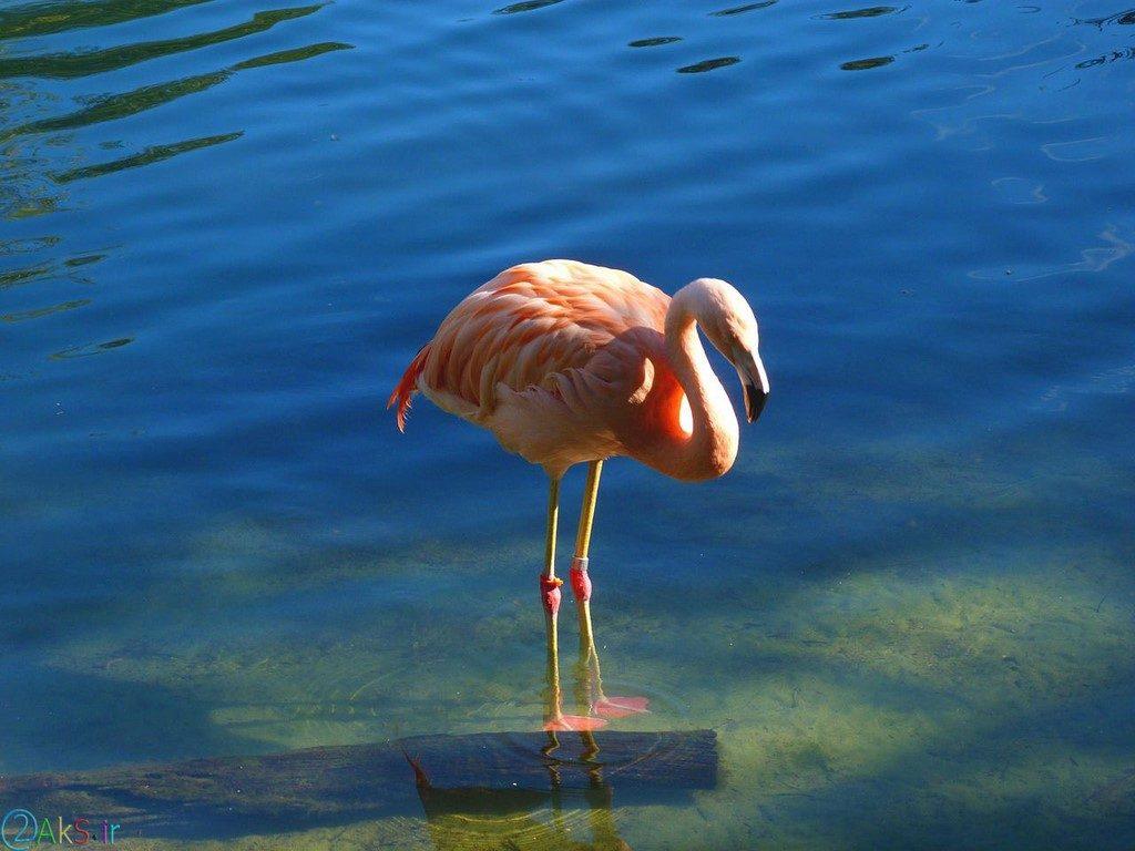 Photo Flamingo