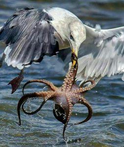 Photo Octopus