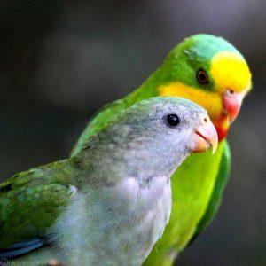 Photo Parrot