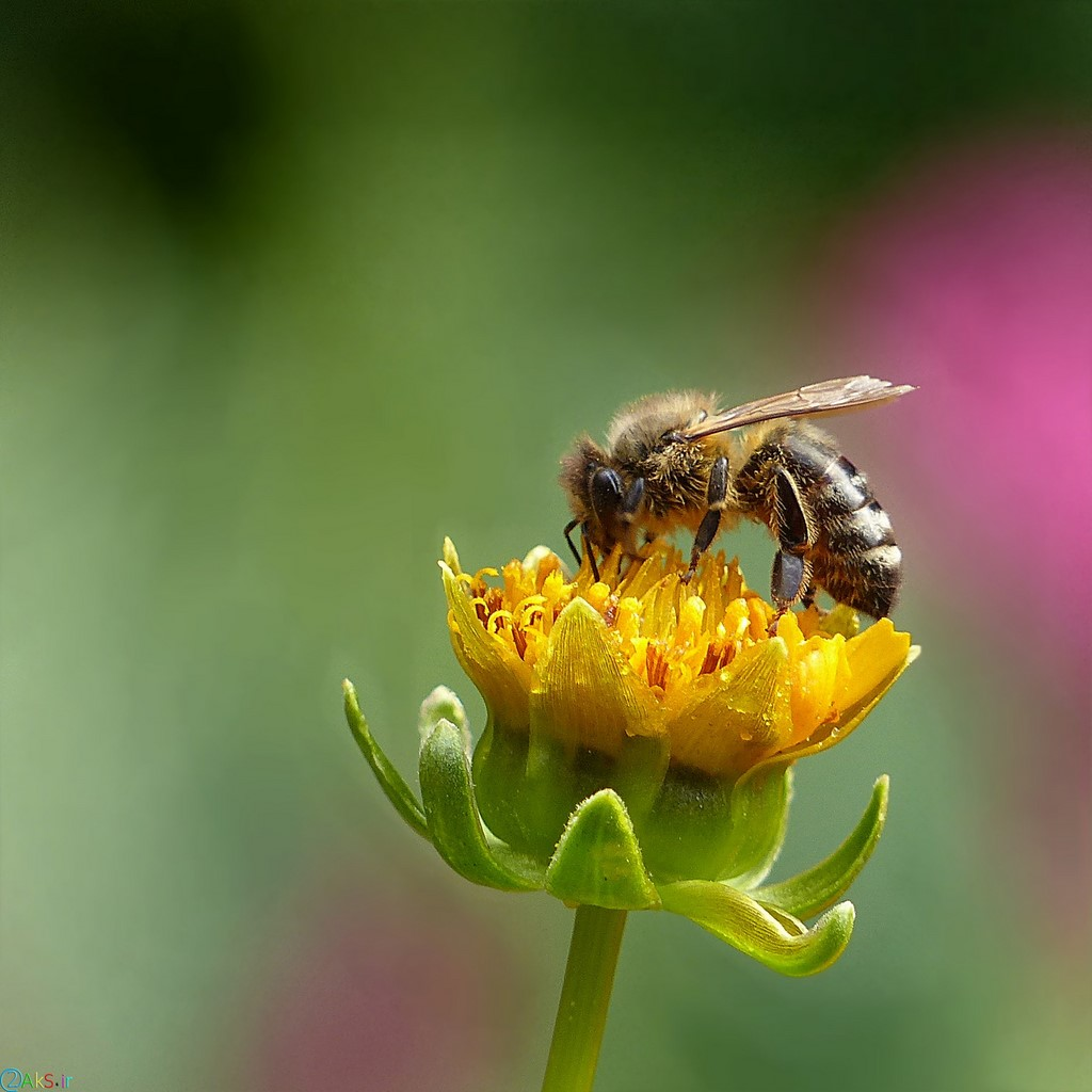 Photo bee