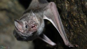 Photos Bat