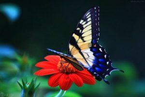 Photos Butterflies