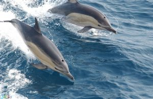 Photos Dolphin
