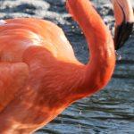 Photos Flamingo